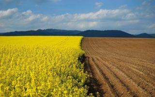 Особенности перевода земли из сельхозназначения в ИЖС